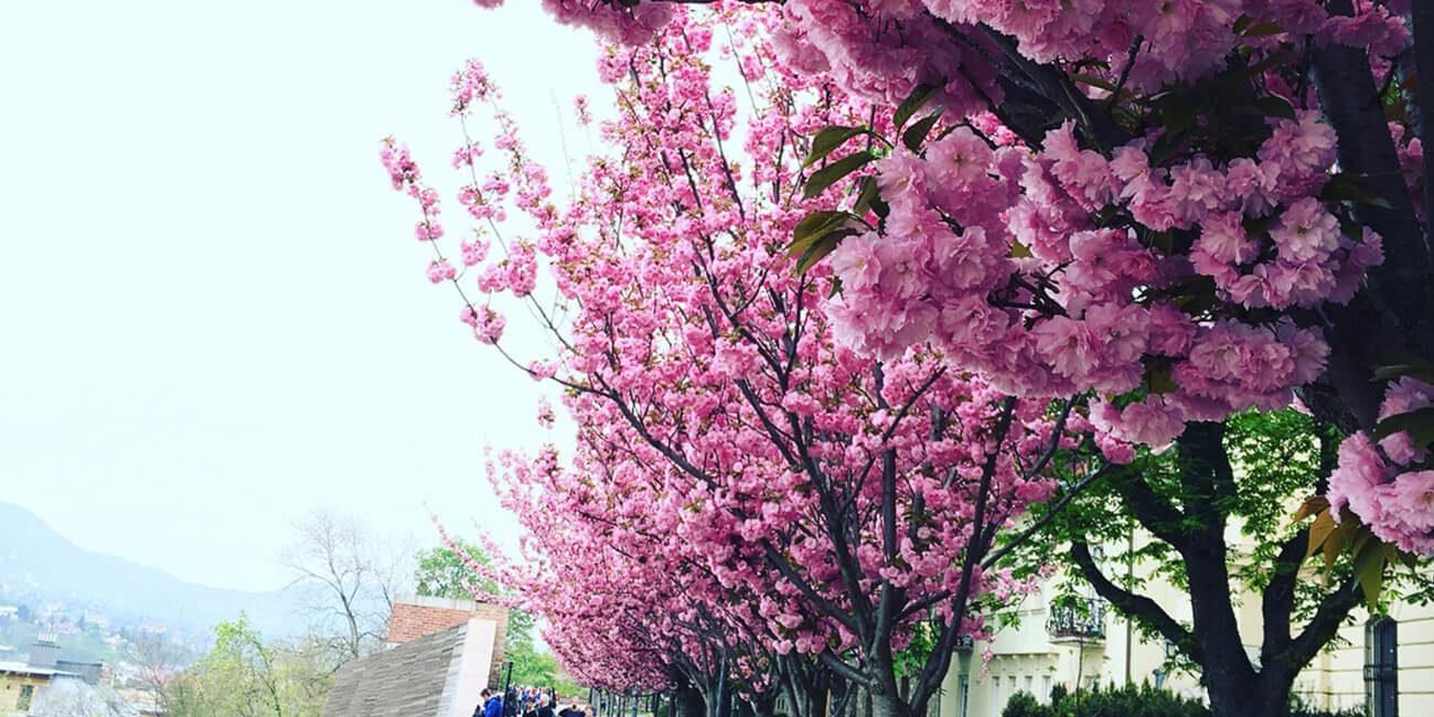 Wild Cherry Budapest